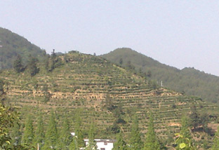 Mountainous region of Anhui.  In the distance, is a mountain of round tea bushes.