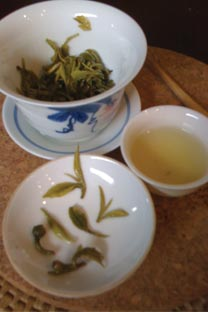 Brewing Songluo green tea in a gaiwan (lidded cup).
