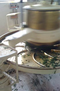 Tea leaves being rolled in machine.  The leaves are crushed to kick start the oxidation process.