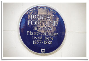 English Heritage blue plaque outside Robert Fortune's home at 9 Gilston Road, Chelsea, London (no mention of 'tea thief'!)