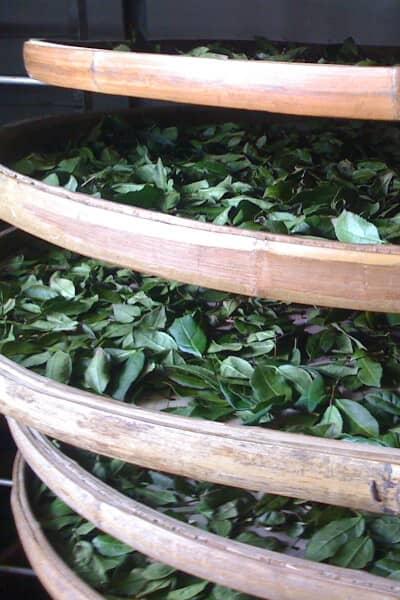 teanamu chaya teahouse season summer cooling